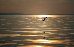 在日落的鸟飞行 免版税库存图片