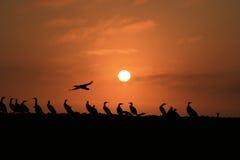 在日落的鸟 免版税库存照片