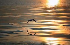 在日落的鸟 免版税图库摄影