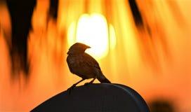 在日落的鸟 库存图片