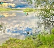 在日落的鸥在湖 库存图片