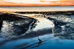 在日落的鸭子阴影 库存照片