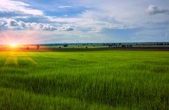 在日落的麦田在云彩背景  免版税库存照片