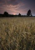 在日落的麦田 免版税库存照片