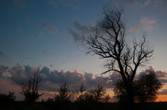 在日落的结构树剪影 库存照片