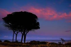 在日落的结构树剪影 免版税库存照片