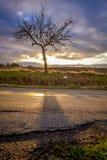 在日落的结构树 库存照片