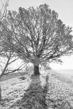 在日落的结构树 免版税库存照片