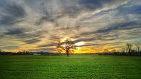 在日落的结构树 图库摄影