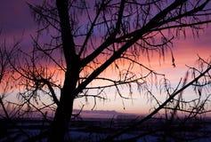 在日落的结构树 免版税图库摄影