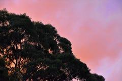 在日落的结构树 库存图片