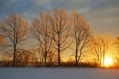 在日落的冻树 库存图片