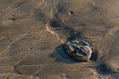 在日落的水母在Sooes靠岸,华盛顿 库存图片