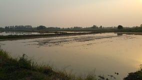 洪水在日落的稻田 库存照片