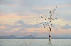 在日落的死的树在湖 库存图片