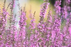 在日落的紫色淡紫色 免版税库存照片