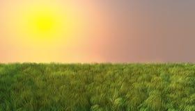 在日落的绿草 库存照片