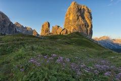 在日落的Cinque Torri山与在前景的桃红色花,白云岩,威尼托,意大利 库存图片