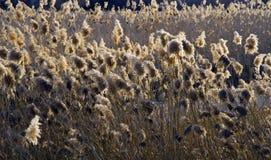 在日落的Praire草在犹他 图库摄影