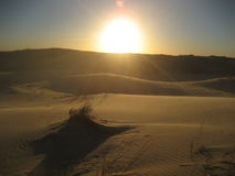 在日落的Sandune 免版税库存图片