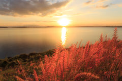 在日落秀丽风景的特写镜头草 库存照片