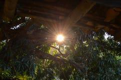 在日落结构树之后 免版税图库摄影