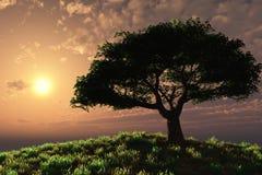 在日落结构树的山坡 库存照片