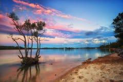 在日落结构树的美洲红树 免版税库存图片
