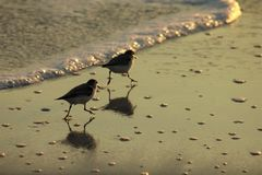 在日落美丽如画沙子的吹笛者附近的巴拿马市海滩墨西哥湾 免版税库存照片