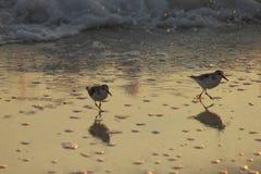 在日落美丽如画沙子的吹笛者附近的巴拿马市海滩墨西哥湾 库存照片