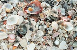 在日落美丽如画的白色沙子壳附近的巴拿马市海滩墨西哥湾 库存照片
