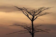 在日落背景以后的树 库存照片