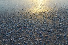 在日落背景期间的海滩壳 免版税库存照片