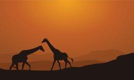 在日落背景的剪影长颈鹿 库存图片