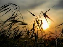 在日落背景的小尖峰 库存图片