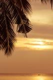 在日落背景的抽象椰子叶子与拷贝空间 免版税库存图片