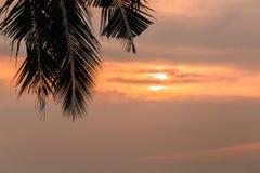 在日落背景的抽象椰子叶子与拷贝空间 库存照片