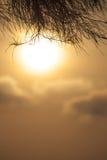 在日落背景的杉木枝杈 免版税库存图片