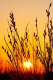 在日落背景的杨柳 图库摄影