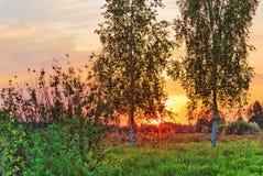 在日落背景的树 免版税库存图片