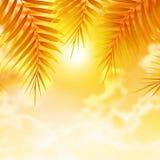 在日落背景的棕榈叶 免版税库存图片