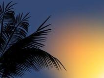 在日落背景的棕榈叶 库存图片