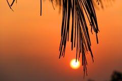 在日落背景的棕榈早午餐 免版税库存图片