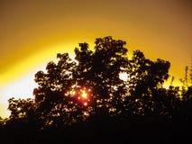 在日落背景的花  免版税库存照片