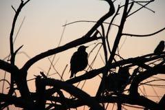 在日落背景的鸟剪影 图库摄影