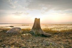 在日落背景的死的树桩 免版税库存照片
