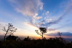 在日落蓝天的树 库存图片