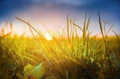 在日落阳光的秋天草  库存照片