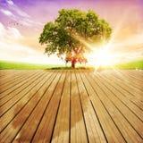 在日落风景的美丽的树 免版税库存图片