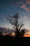 在日落,垂直的看法的树剪影 免版税库存图片